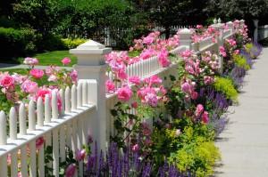 spring Baltimore